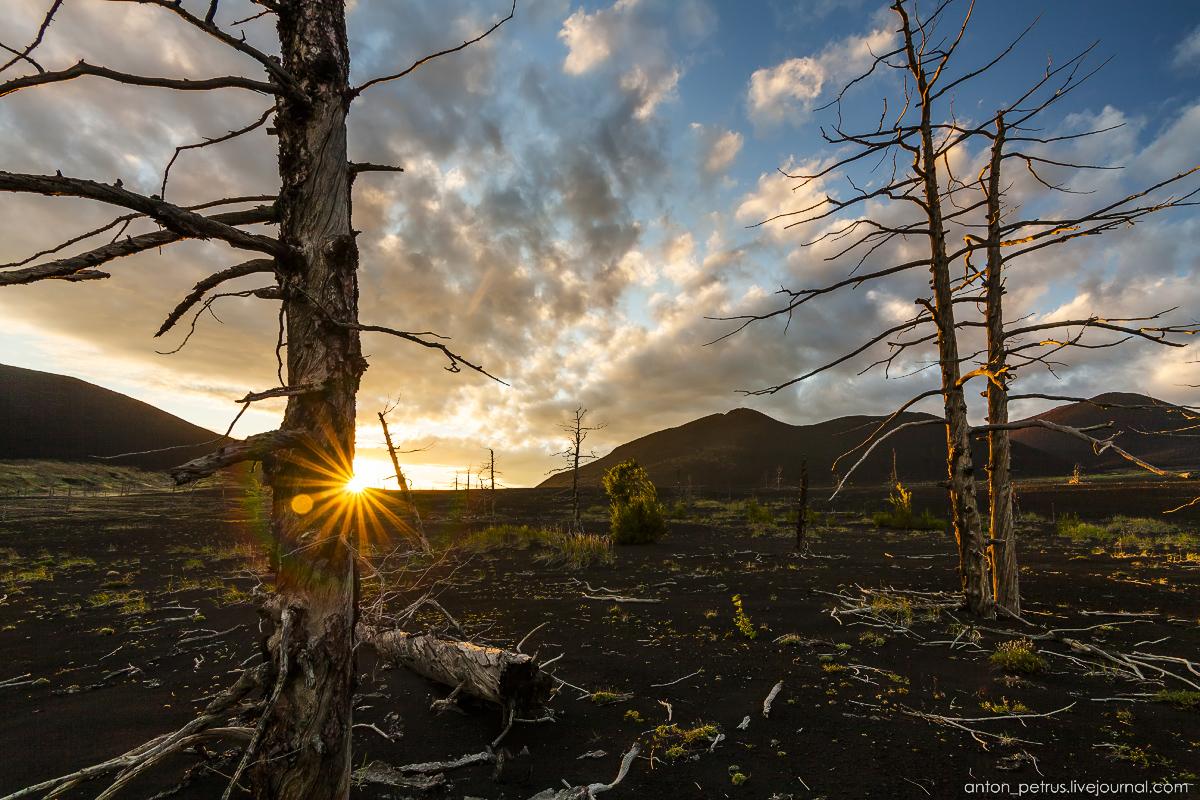 dead-forest-tolbachik-11