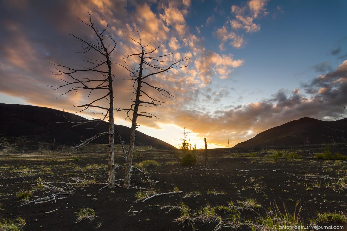 dead-forest-tolbachik-14
