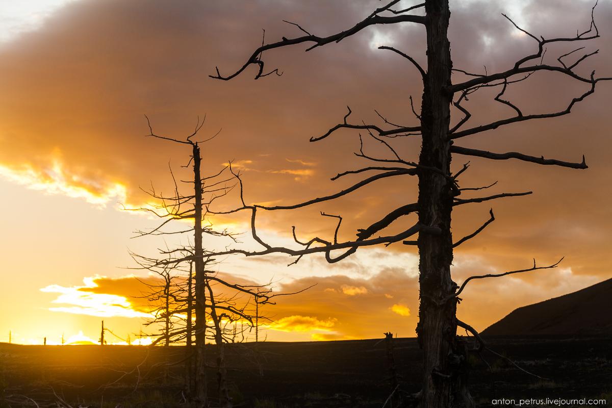 dead-forest-tolbachik-15
