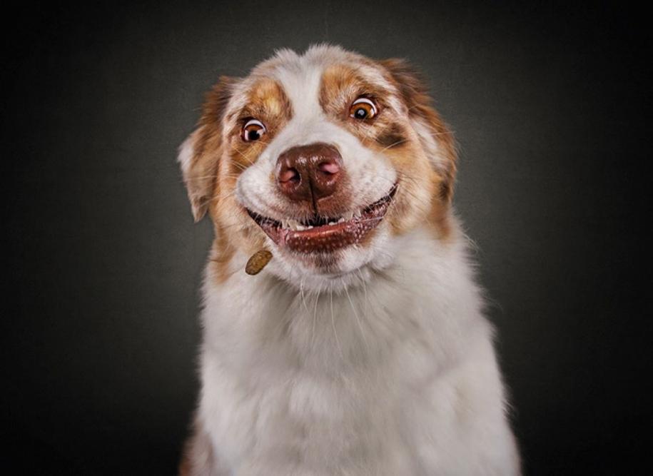 dog-joy-03