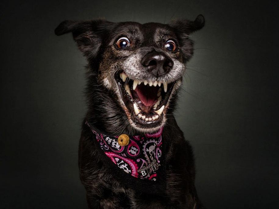 dog-joy-04