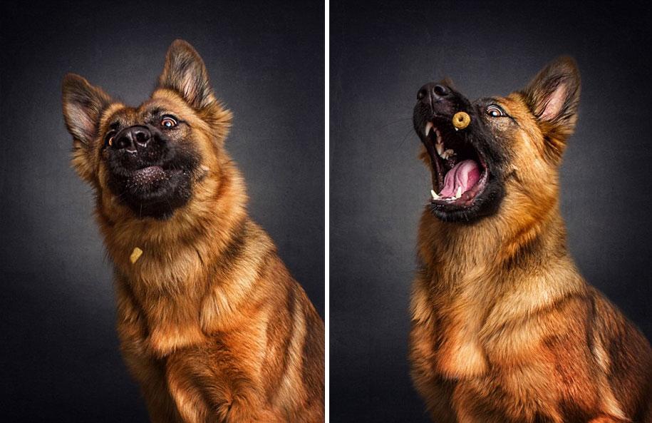dog-joy-10