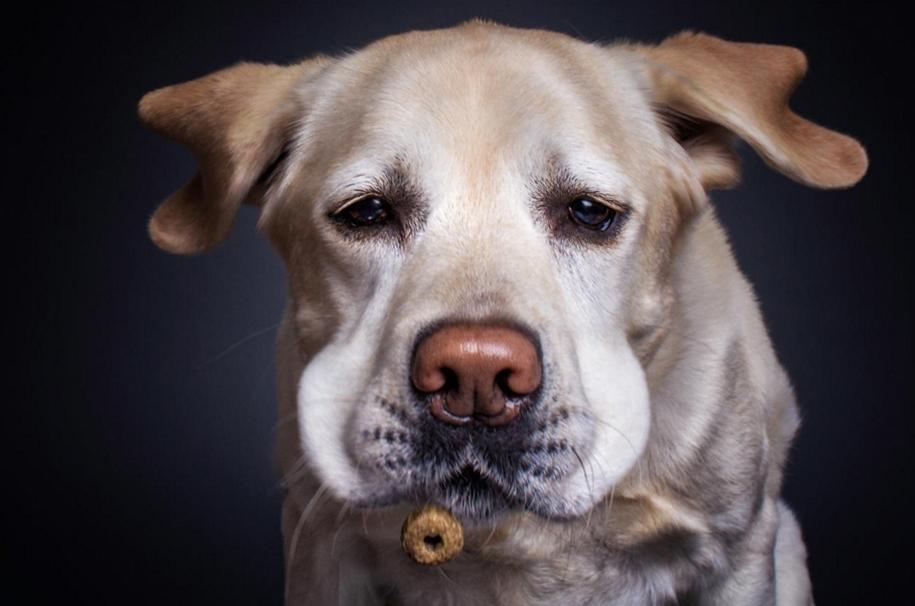 dog-joy-11