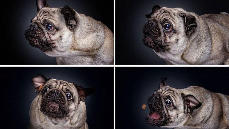 dog-joy-12