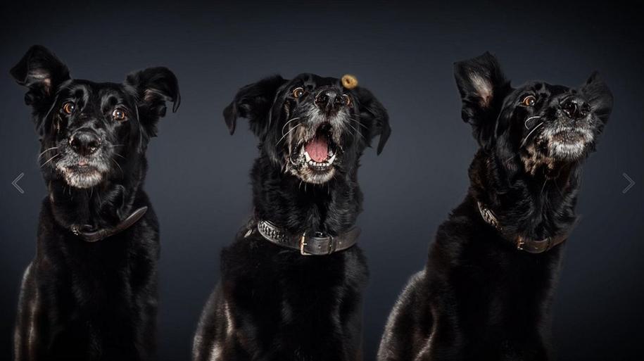 dog-joy-17