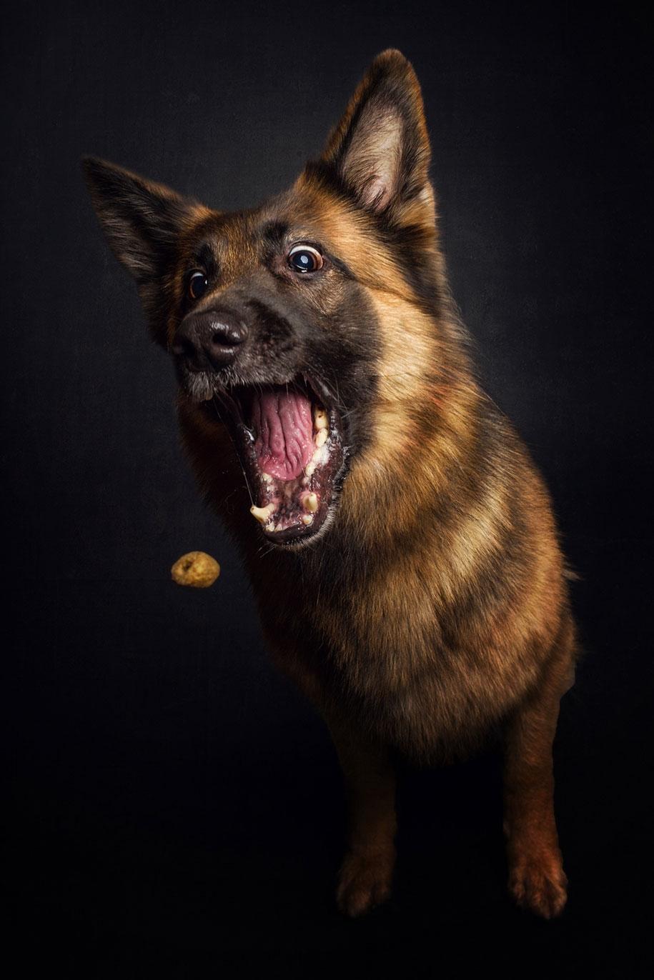 dog-joy-18