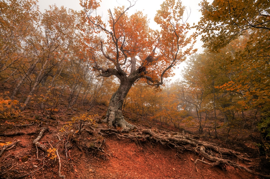 fall-of-crimea-in-the-lens-of-the-professional-landscape-photographers-08
