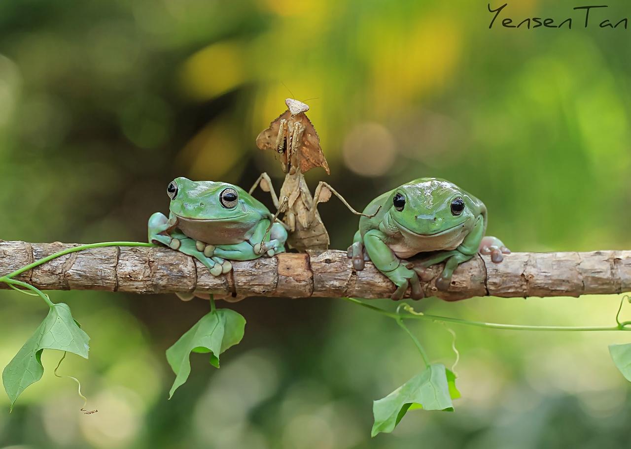 Зеленые фотомодели Tанто Йенсена