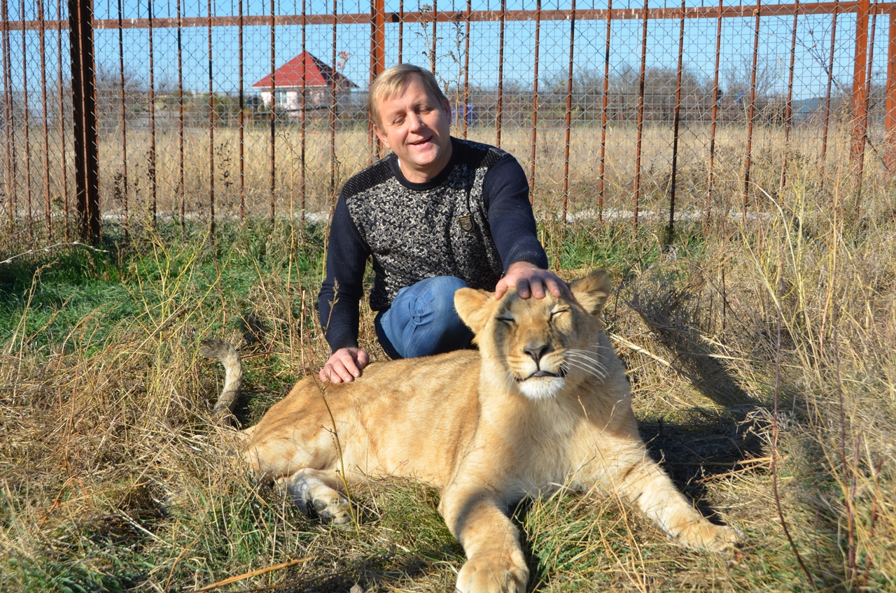 have-saved-the-lioness-lola-in-the-crimean-zoo-has-its-own-pride-01