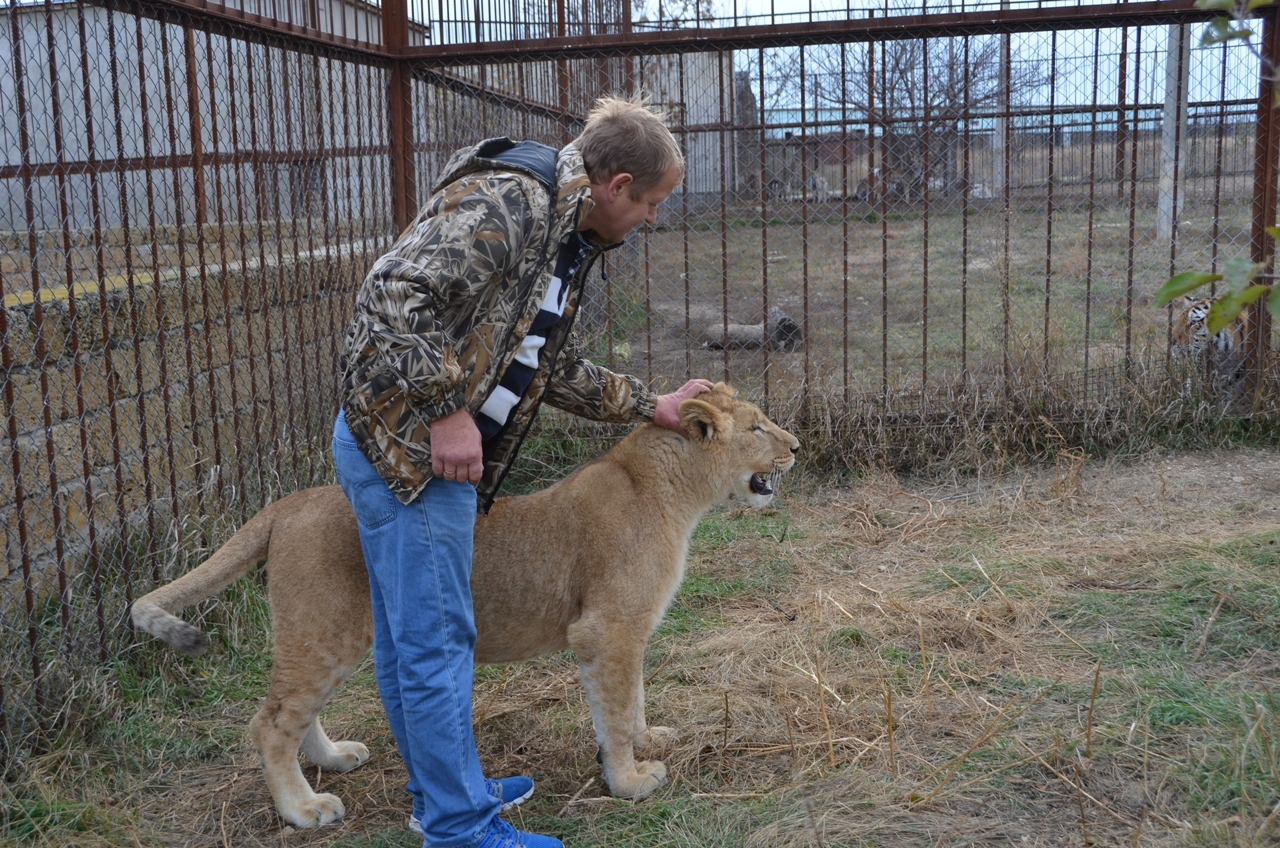 have-saved-the-lioness-lola-in-the-crimean-zoo-has-its-own-pride-02