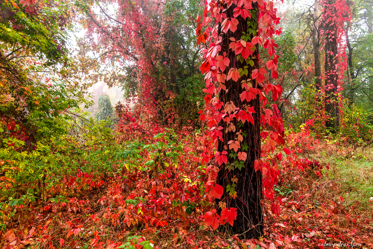 in-the-realm-of-autumn-06