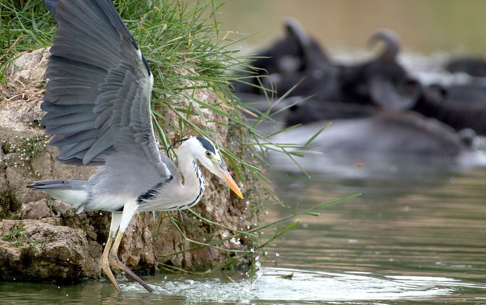 like-the-heron-with-the-snake-fish-shared-01
