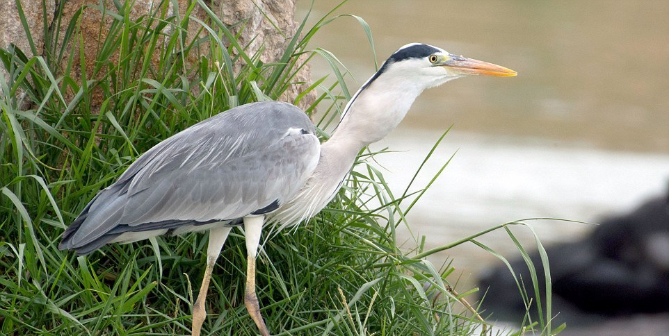 like-the-heron-with-the-snake-fish-shared-09