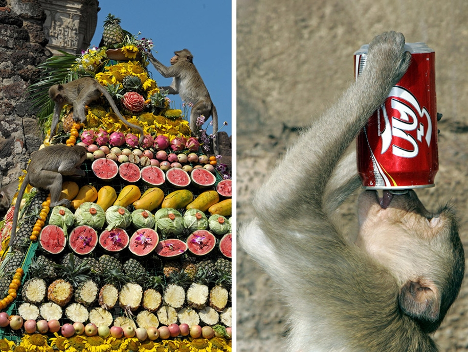 monkey-buffet-festival-a-feast-for-the-monkeys-08
