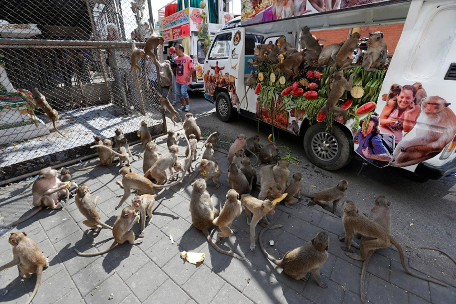 monkey-buffet-festival-a-feast-for-the-monkeys-11