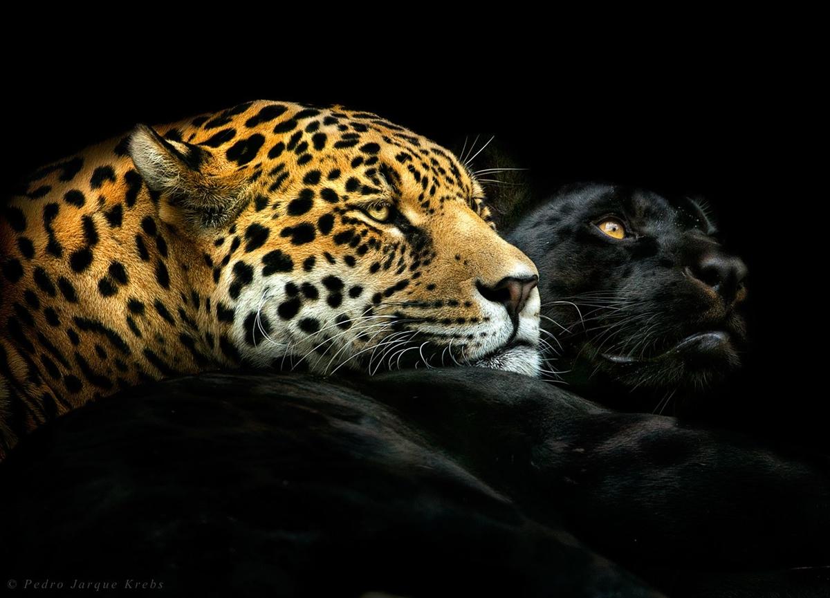 Животные в портретных фотографиях