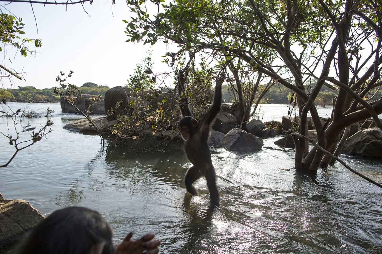 planet-of-the-apes-03