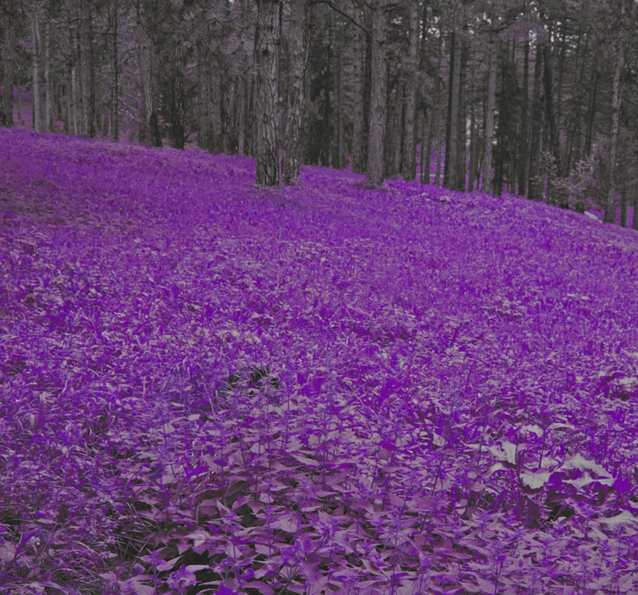 purple-mood-pictures-from-the-most-mysterious-color-06