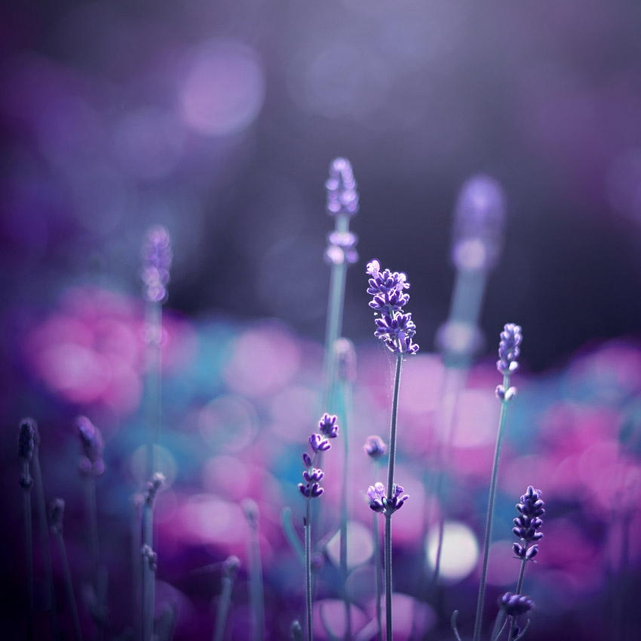purple-mood-pictures-from-the-most-mysterious-color-08