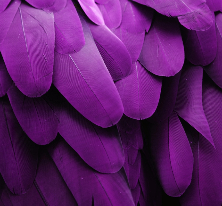 purple-mood-pictures-from-the-most-mysterious-color-14