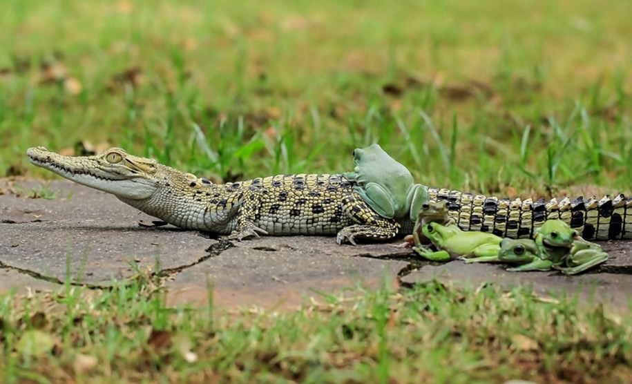riding-a-crocodile-01