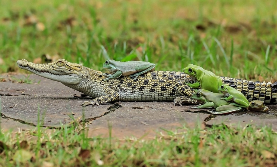 riding-a-crocodile-02