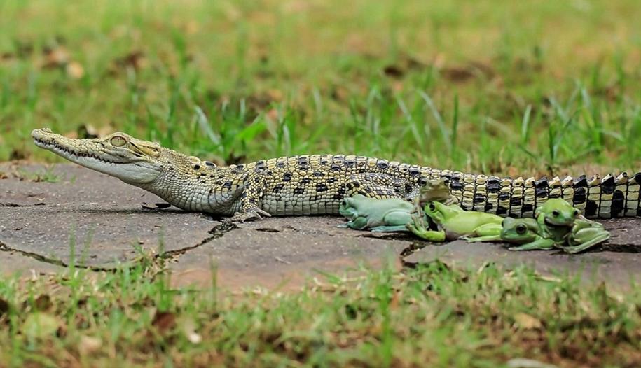 riding-a-crocodile-03