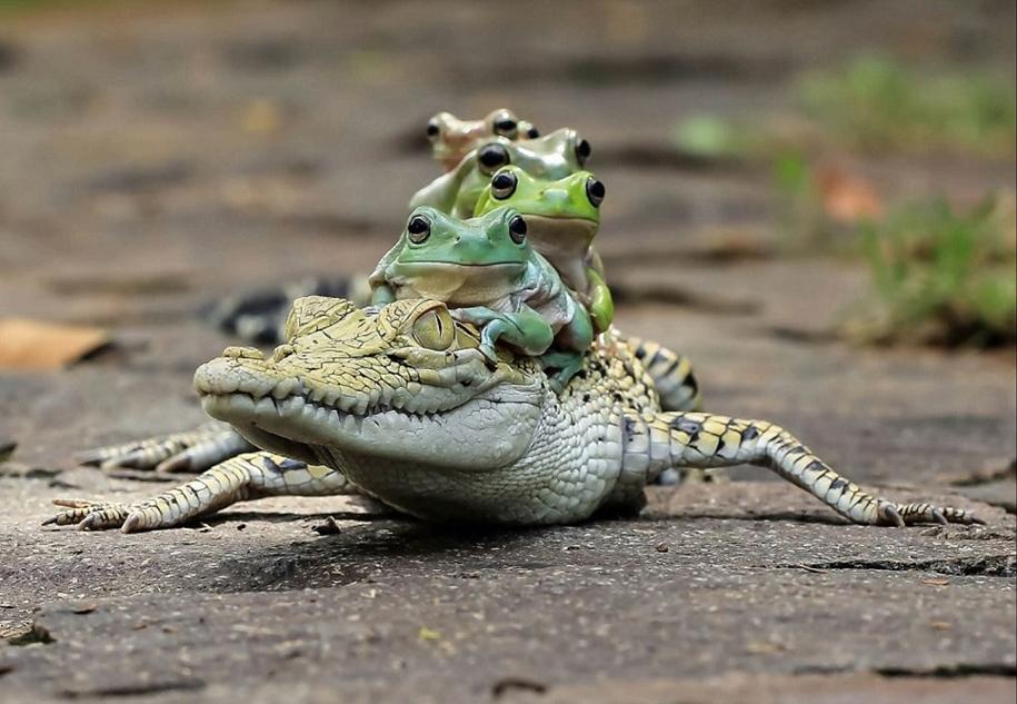 riding-a-crocodile-04