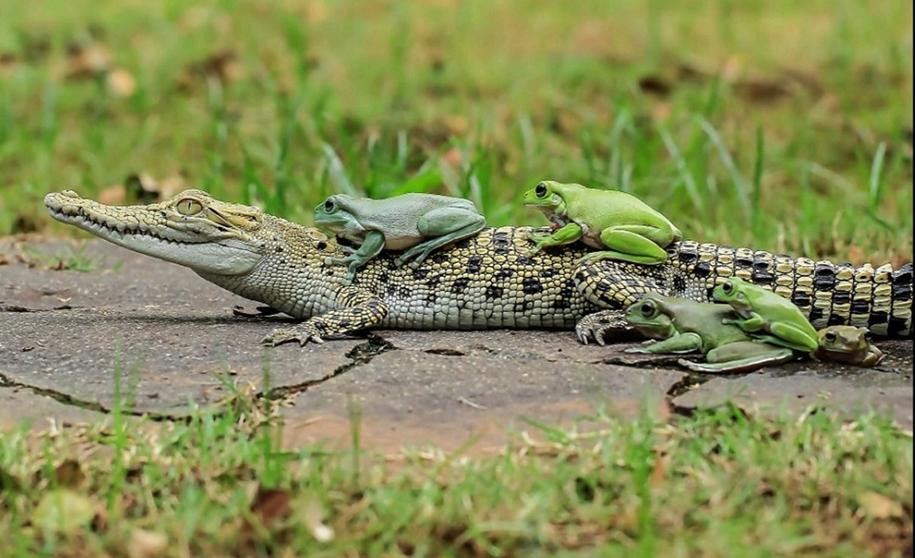 riding-a-crocodile-05
