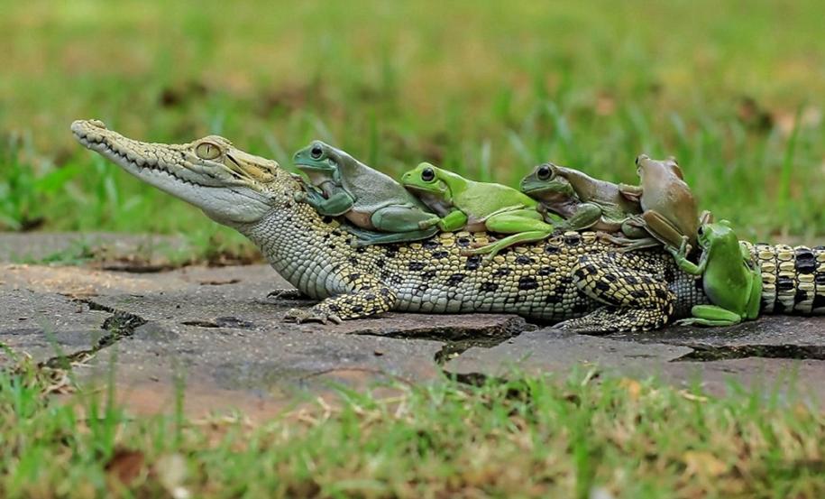 riding-a-crocodile-06