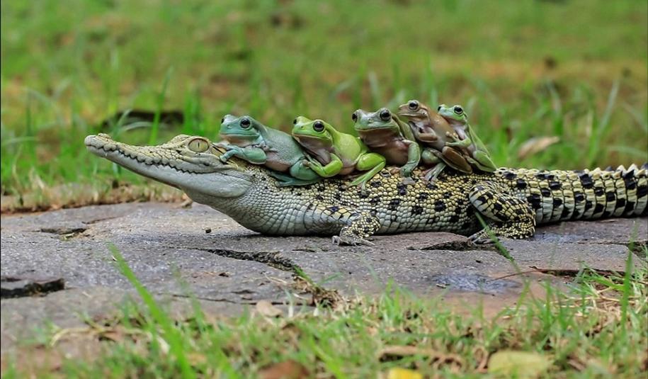 riding-a-crocodile-07