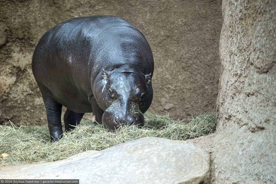 the-main-zoo-germany-03