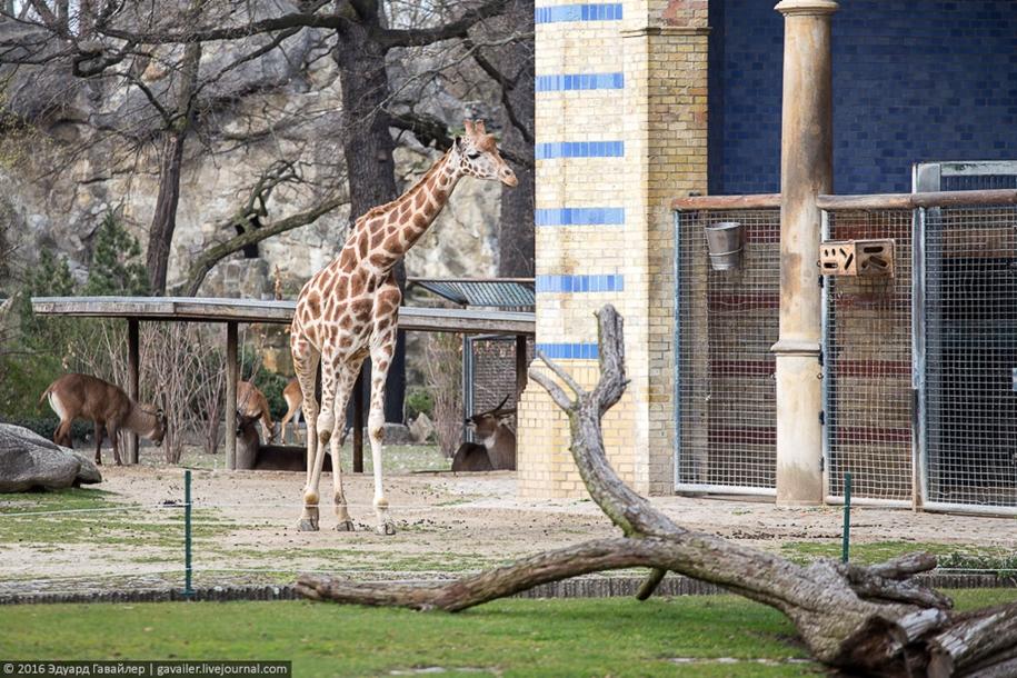 the-main-zoo-germany-21