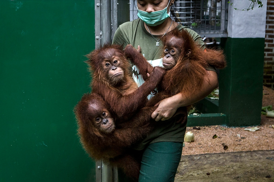 the-rehabilitation-centre-for-orangutans-in-indonesia-01