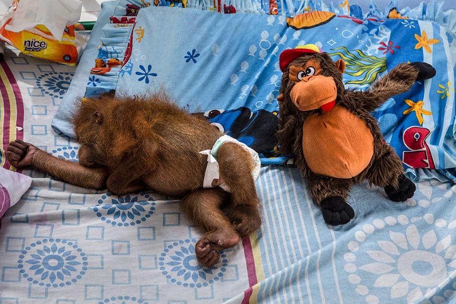 the-rehabilitation-centre-for-orangutans-in-indonesia-02
