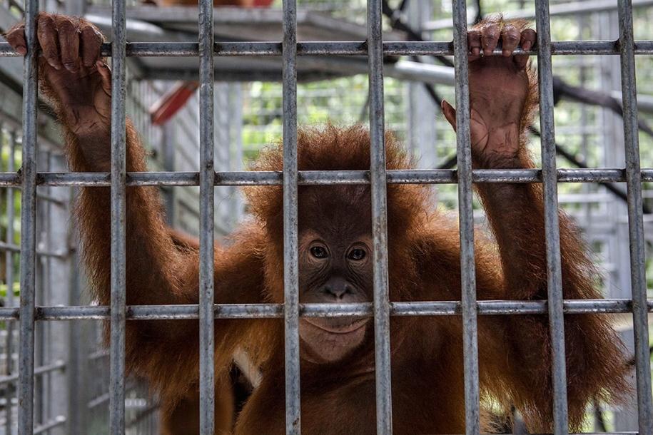 the-rehabilitation-centre-for-orangutans-in-indonesia-03