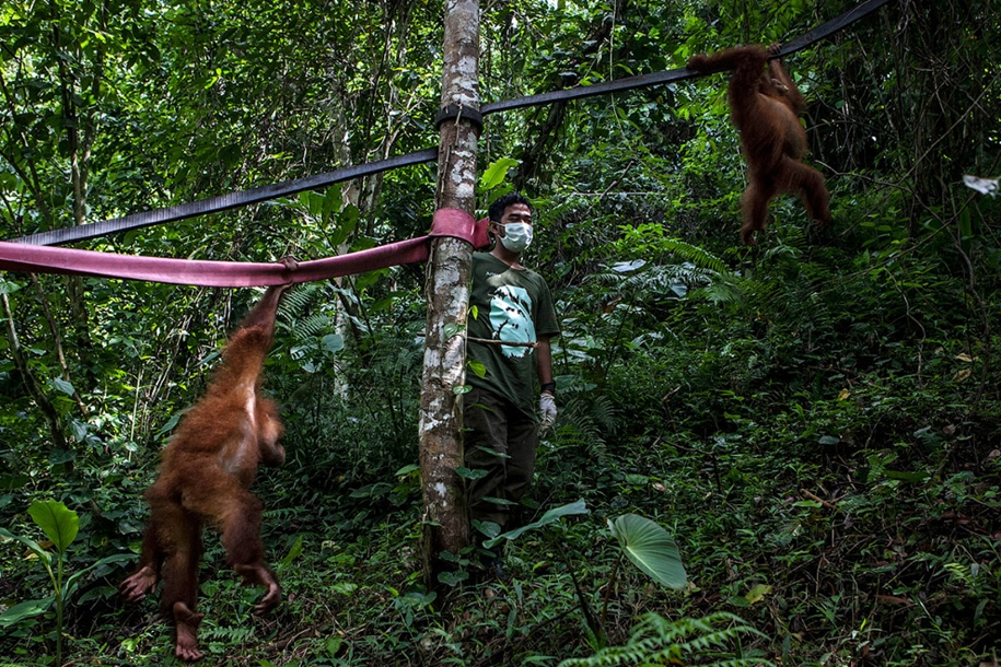 the-rehabilitation-centre-for-orangutans-in-indonesia-07