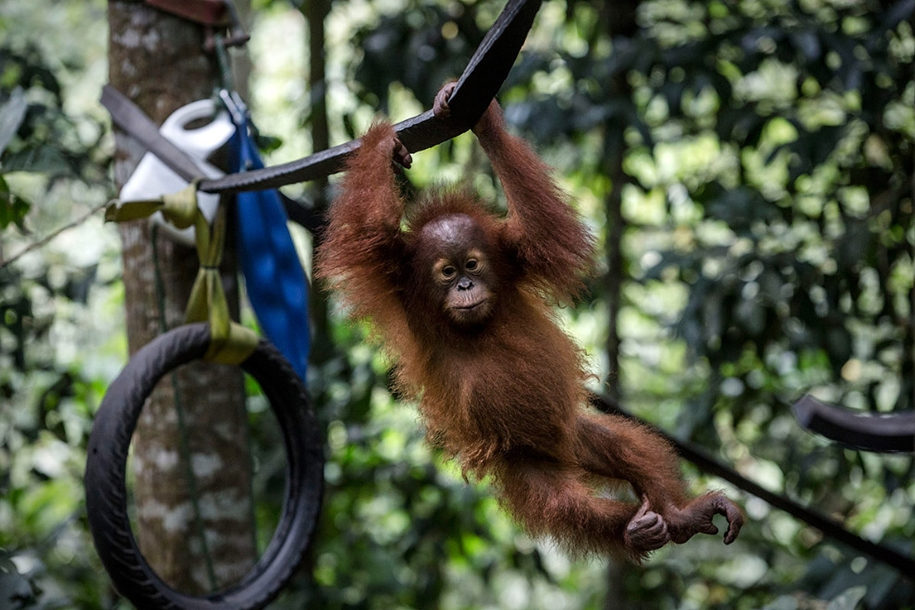 the-rehabilitation-centre-for-orangutans-in-indonesia-08