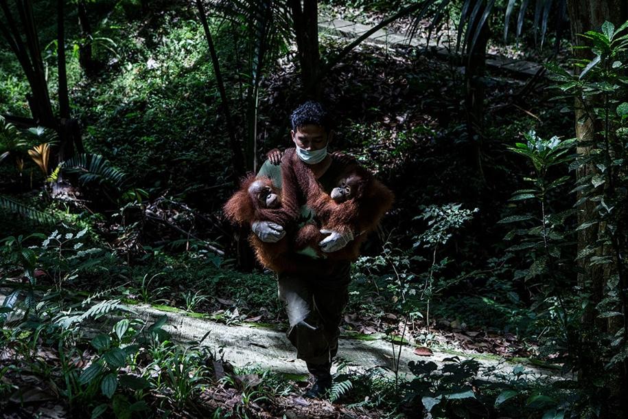 the-rehabilitation-centre-for-orangutans-in-indonesia-09
