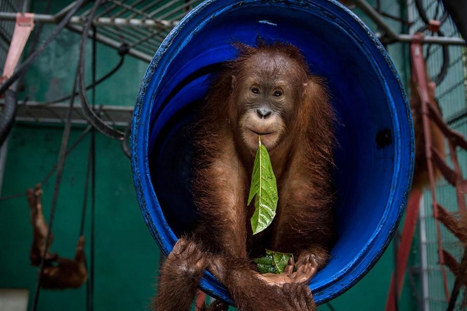 the-rehabilitation-centre-for-orangutans-in-indonesia-10