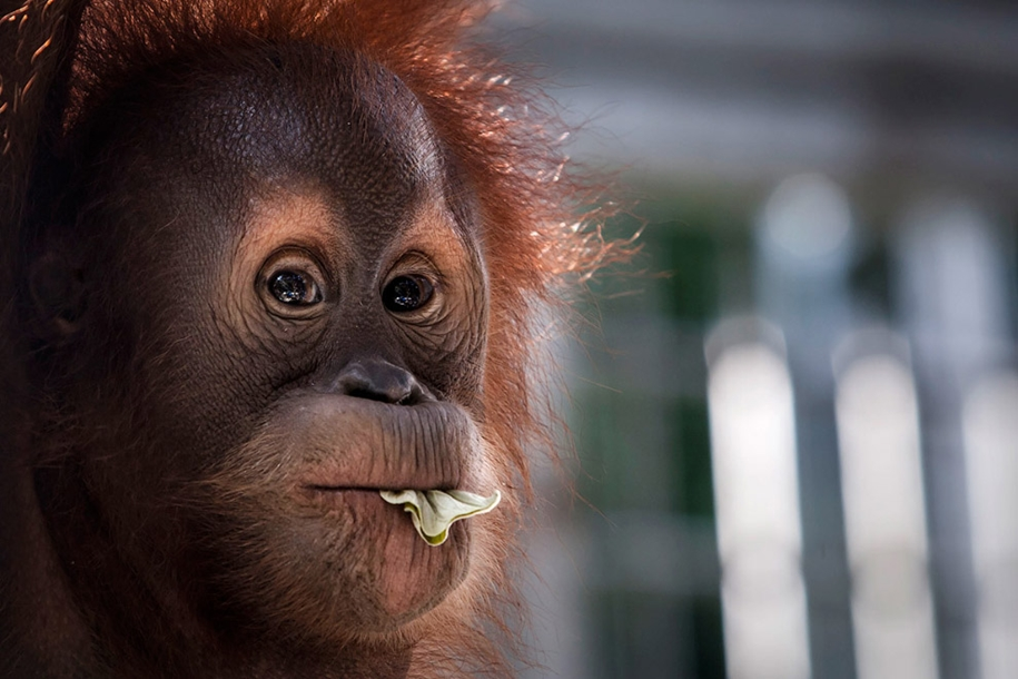the-rehabilitation-centre-for-orangutans-in-indonesia-11