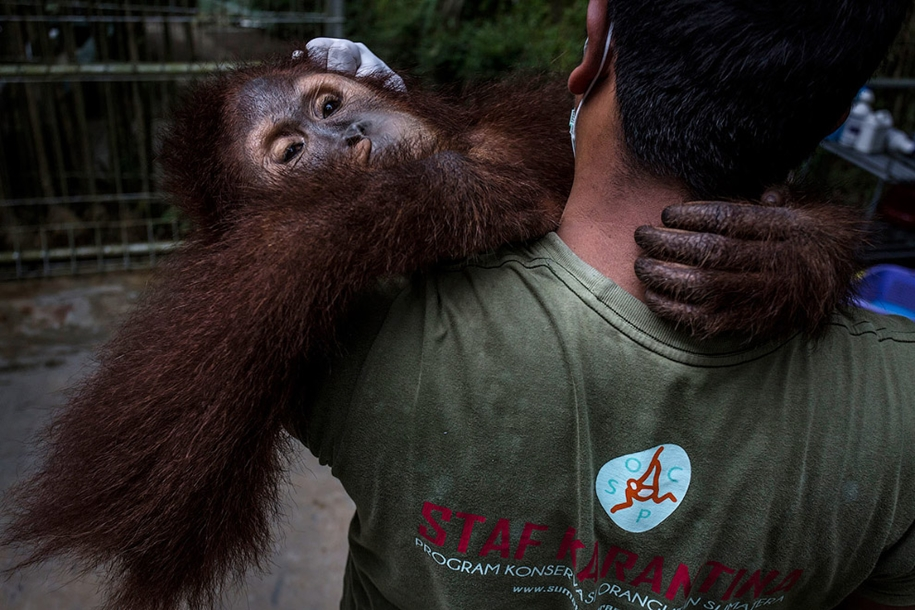 the-rehabilitation-centre-for-orangutans-in-indonesia-12
