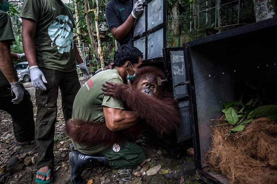 the-rehabilitation-centre-for-orangutans-in-indonesia-13