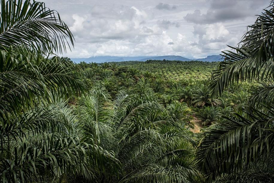 the-rehabilitation-centre-for-orangutans-in-indonesia-17