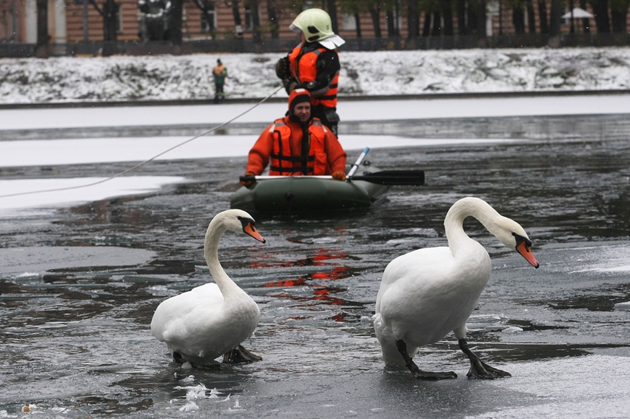 the-staff-of-the-ministry-of-moscow-rescued-two-swans-and-ducks-from-frozen-ponds-02