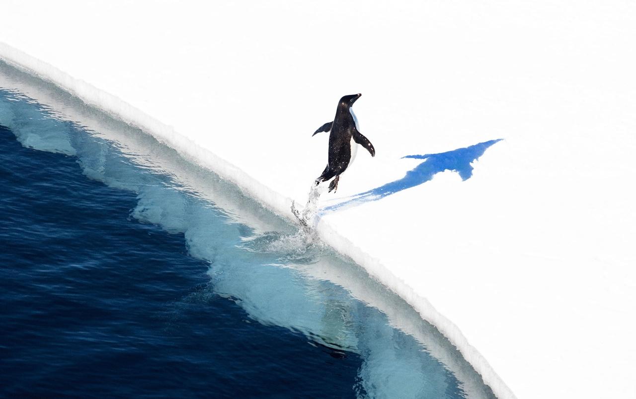 worlds-largest-marine-park-created-in-antarctic-ocean-02