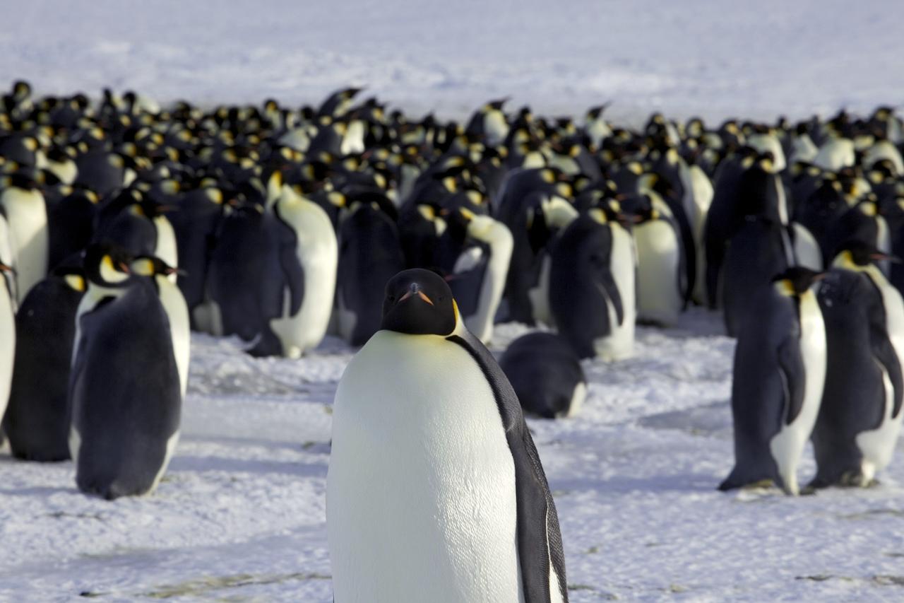 worlds-largest-marine-park-created-in-antarctic-ocean-04