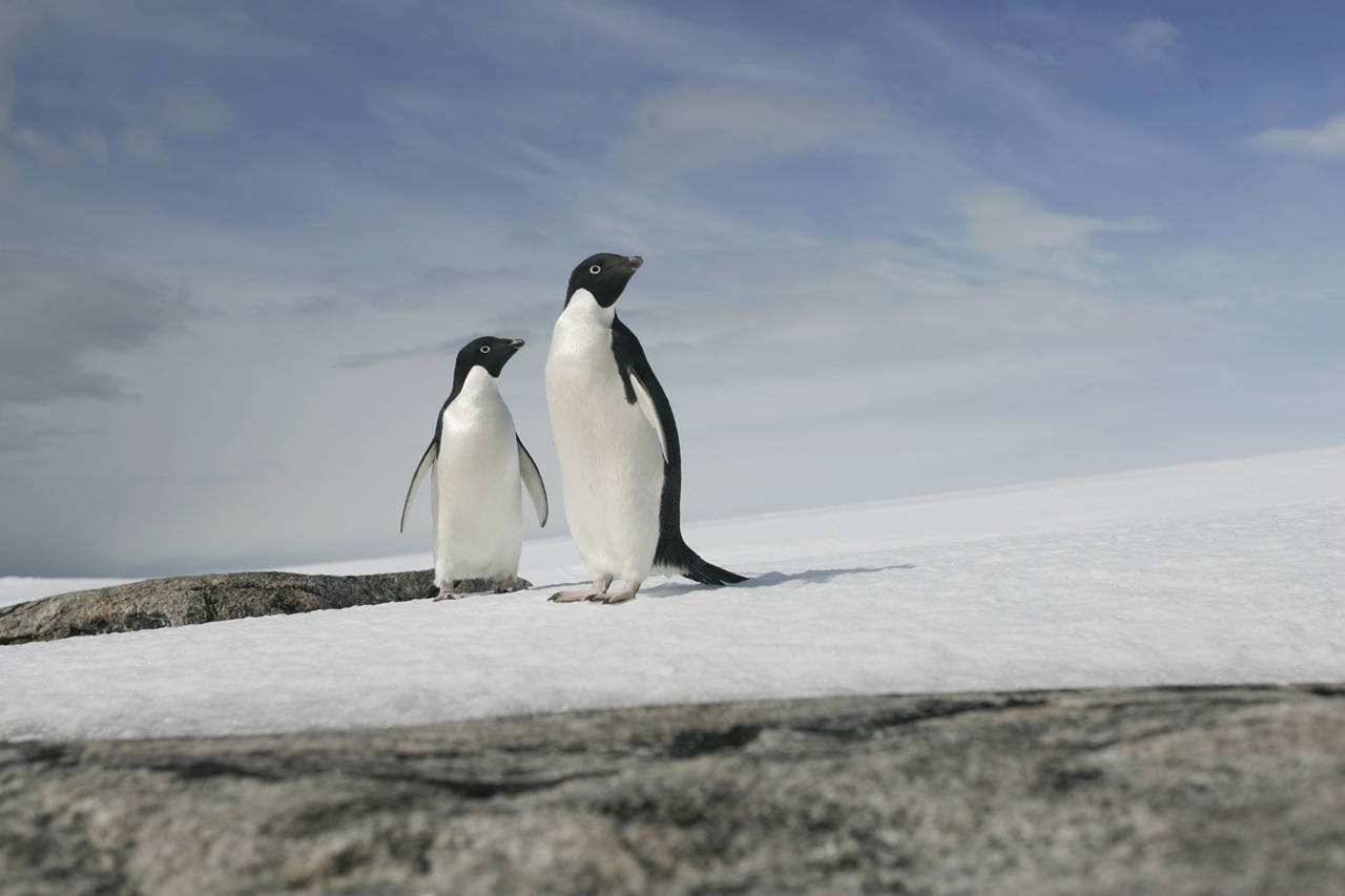 worlds-largest-marine-park-created-in-antarctic-ocean-05