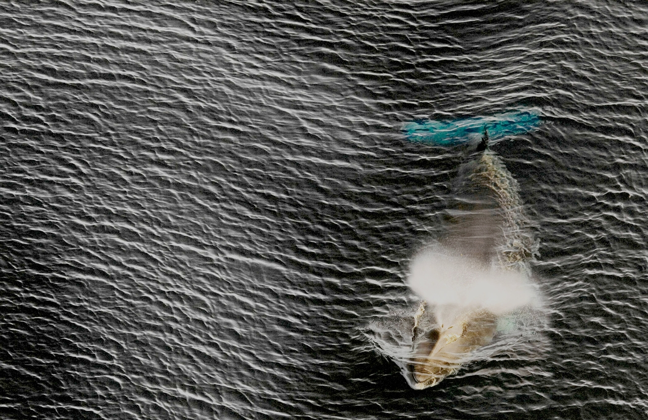 worlds-largest-marine-park-created-in-antarctic-ocean-06