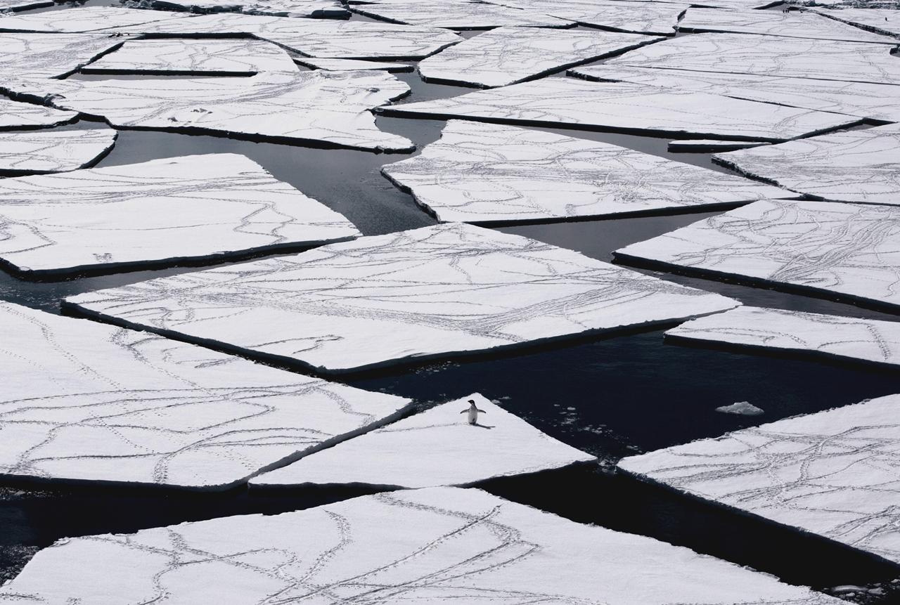 worlds-largest-marine-park-created-in-antarctic-ocean-08